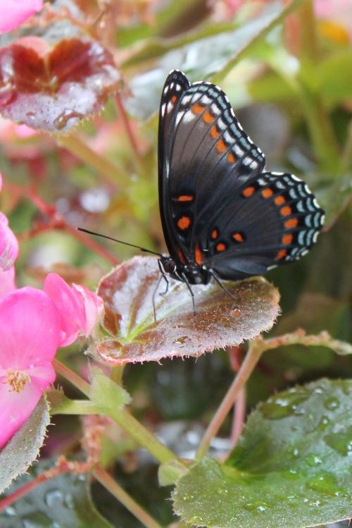 butterfly-2015